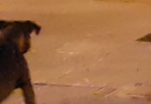 Vitoria: Denuncia por perros sueltos acaba en tráfico de drogas