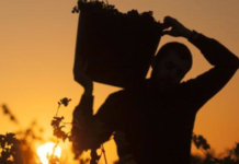 bodegas alava Best Of Wine Tourism