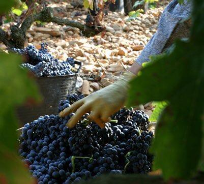 vino países cosecha