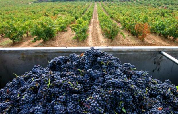vino viñedos