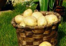 patata sector agrario