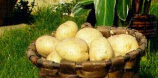 patata sector agrario alimentos reparto