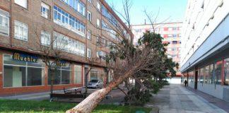 árbol caído en la calle Lima Vitoria-Gasteiz