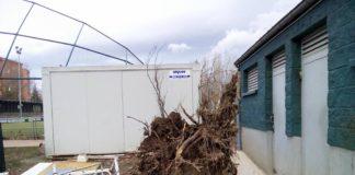 cae árbol en arinzvarra destroza el campo de fútbol
