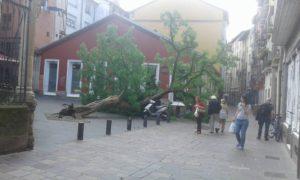 árbol caído bodegón