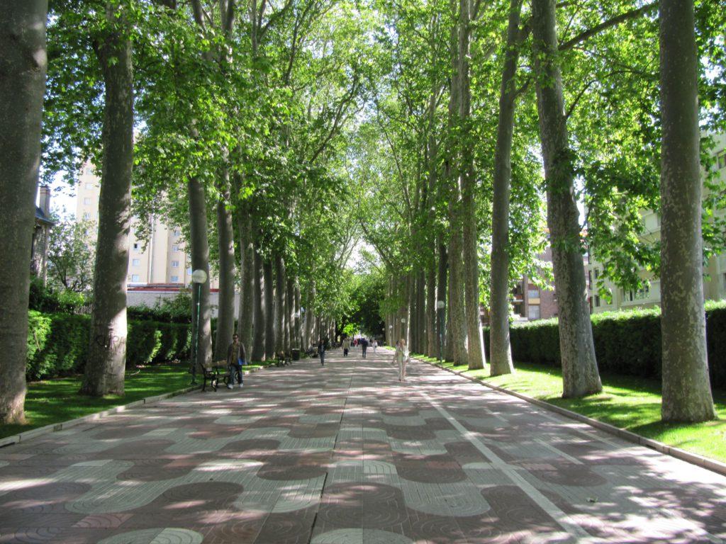 árboles paseo de la senda