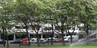 Riegos caóticos en Vitoria ¡Morirán más árboles!