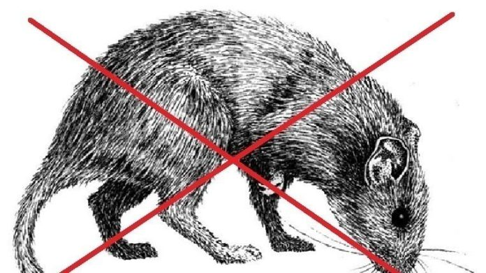 recogida firmas evitar ratas vitoria