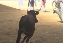 vaquillas vitoria