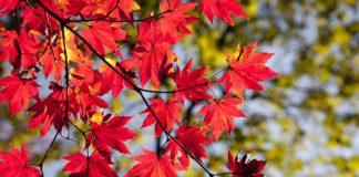 Previsión del tiempo para otoño en Álava, Bizkaia y Gipuzkoa