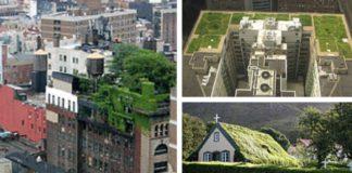 vegetación ejemplo de techos verdes