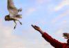 liberan aves