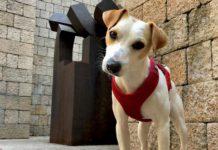 Pipper vuelve a Vitoria y Rioja Alavesa