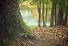 anillo verde junto a zabalgana bosque