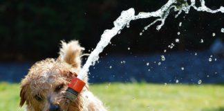 ¡Zasca judicial! Apasos vuelve a cuidar animales en Vitoria