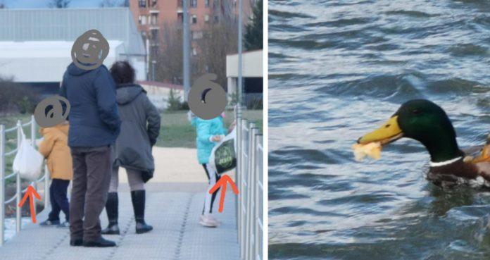 El plan con niños y patos en Vitoria te puede costar 750 €