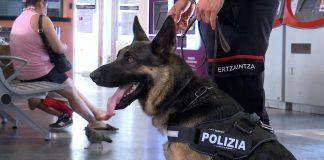 Perros policía en estaciones de tren y bus de Vitoria y Bilbao