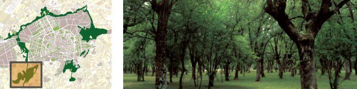 bosque armentia