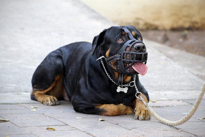 Vitoria: La propietaria del perro peligroso reclama control a otros