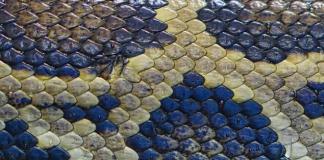 ¡Susto en Bilbao! Llegas a casa y te recibe una serpiente (FOTO)