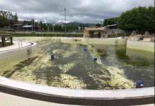 piscina verdín algas